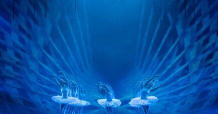 Nye svaner i andedammen – en guide til Svanesøen