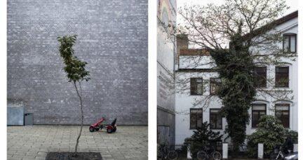 FOTOPROJEKT: Jungle Concrete