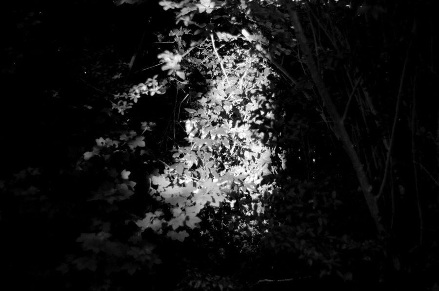 planter_augusta_caroee